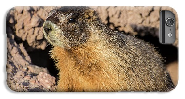Yellow-bellied Marmot - Capitol Reef National Park IPhone 6 Plus Case by Gary Whitton