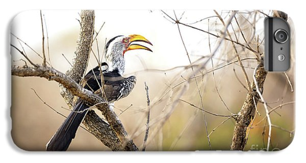 Yellow-billed Hornbill Sitting In A Tree.  IPhone 6 Plus Case by Jane Rix