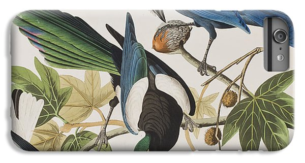 Magpies iPhone 6 Plus Case - Yellow-billed Magpie Stellers Jay Ultramarine Jay Clark's Crow by John James Audubon