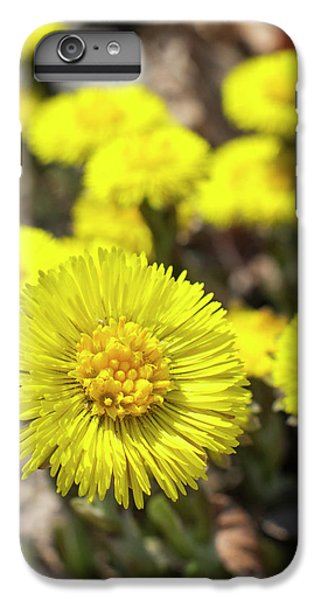 IPhone 6 Plus Case featuring the photograph Yellow Coltsfoot Flowers by Christina Rollo