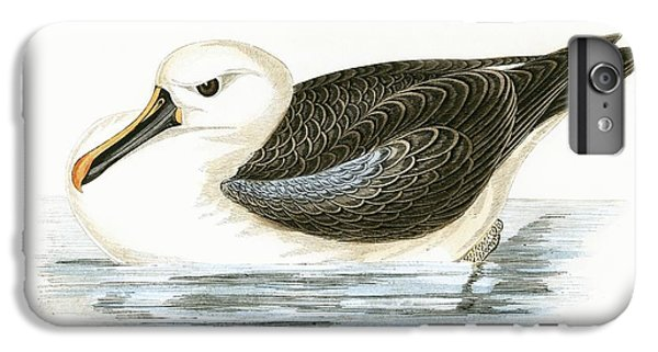 Yellow Nosed Albatross IPhone 6 Plus Case by English School