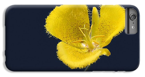 Lily iPhone 6 Plus Case - Yellow Star Tulip - Calochortus Monophyllus by Christine Till