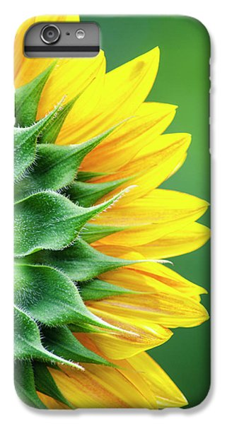 Yellow Sunflower IPhone 6 Plus Case by Christina Rollo