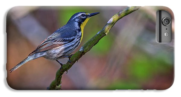 Yellow-throated Warbler IPhone 6 Plus Case by Rick Berk
