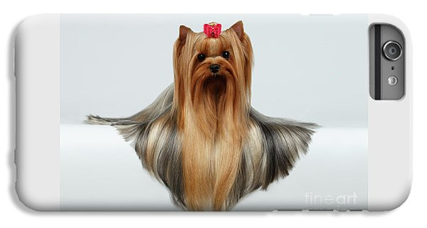 Yorkshire Terrier Dog With Long Groomed Hair Lying On White  IPhone 6 Plus Case by Sergey Taran