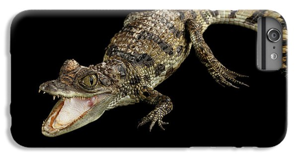 Young Cayman Crocodile, Reptile With Opened Mouth And Waved Tail Isolated On Black Background In Top IPhone 6 Plus Case by Sergey Taran