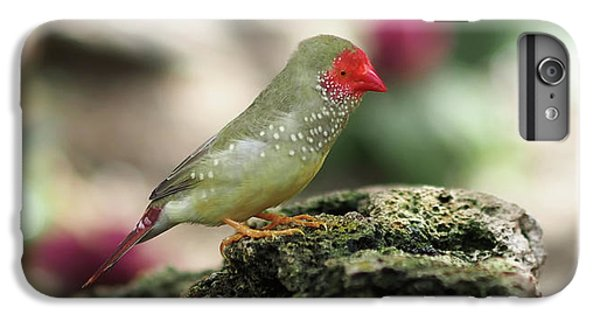 Young Star Finch IPhone 6 Plus Case