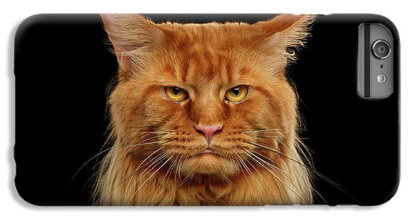 Cat iPhone 6 Plus Case - Angry Ginger Maine Coon Cat Gazing On Black Background by Sergey Taran