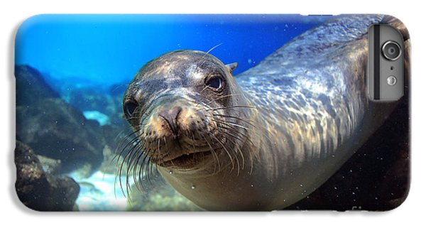 Lion iPhone 6 Plus Case - Sea Lion Swimming Underwater In Tidal by Longjourneys