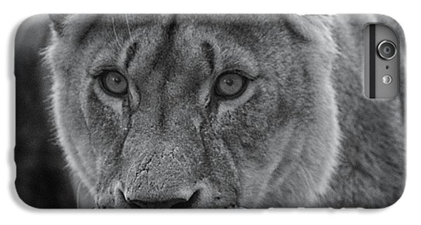 Lion Head iPhone 6 Plus Case - The Hunt by Martin Newman