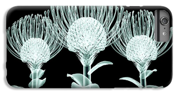 Floral iPhone 6 Plus Case - Xray Image Of A Flower  Isolated On by Posteriori
