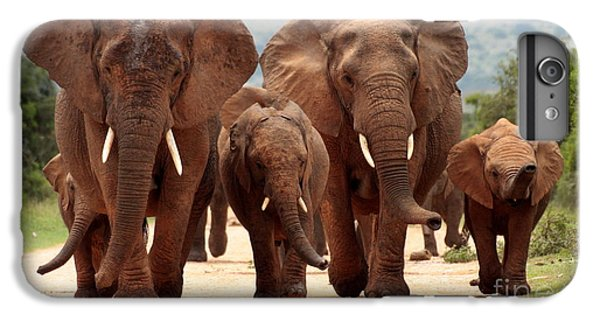Lion iPhone 6 Plus Case - A Herd Of Elephant Walk Towards The by Jonathan Pledger