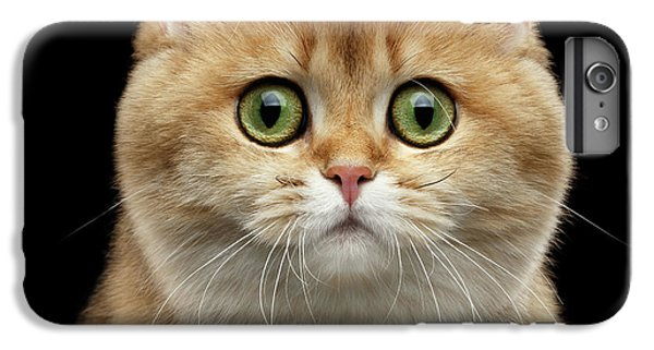 Cat iPhone 6 Plus Case - Close-up Portrait Of Golden British Cat With Green Eyes by Sergey Taran