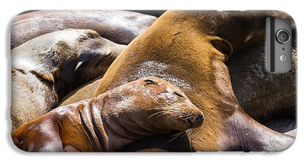 Lion iPhone 6 Plus Case - Group Of California Sea Lions Sun by Wollertz