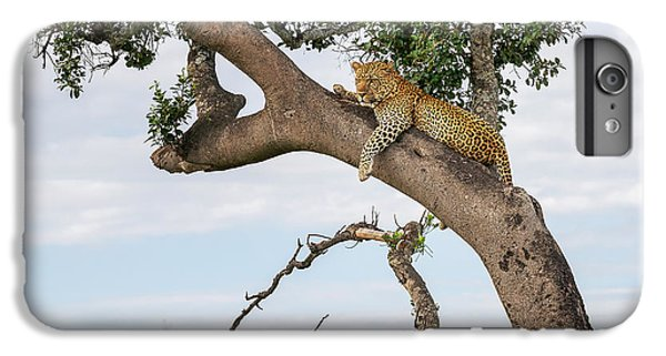 Africa iPhone 6 Plus Case - Leopard by Mikhail Turkeev