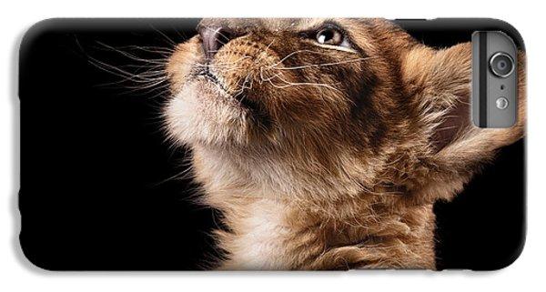 Lion iPhone 6 Plus Case - Little Lion Cub In Studio On Black by Ekaterina Brusnika