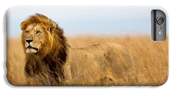 Lion iPhone 6 Plus Case - Mighty Lion Watching The Lionesses Who by Maggy Meyer