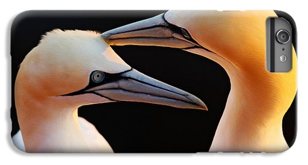 Lion Head iPhone 6 Plus Case - Northern Gannets, Detail Head Portrait by Ondrej Prosicky