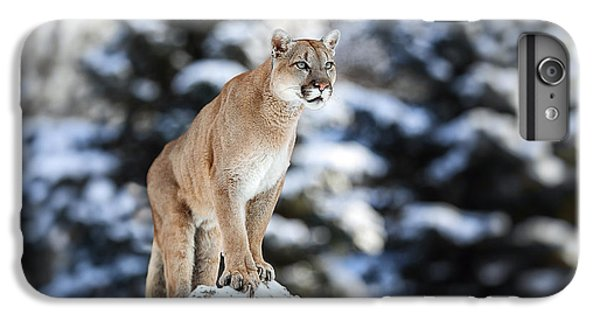 Lion iPhone 6 Plus Case - Portrait Of A Cougar, Mountain Lion by Baranov E