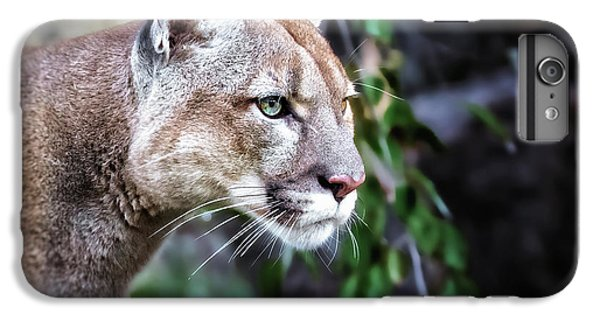 Lion Head iPhone 6 Plus Case - Portrait Of Beautiful Puma. Cougar by Baranov E