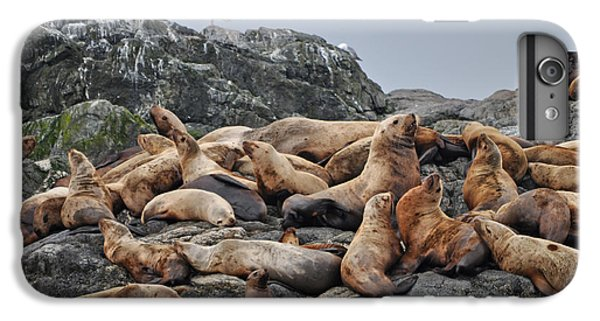 Lion iPhone 6 Plus Case - Sea Lions Near The Inian Islands In by Rocky Grimes