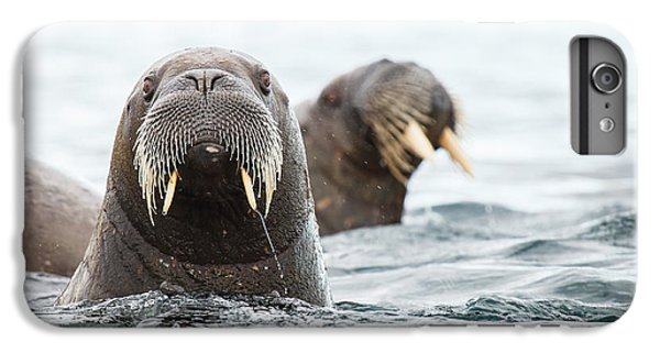 Lion iPhone 6 Plus Case - Sealions Group In Wildlife by Kongsak Sumano