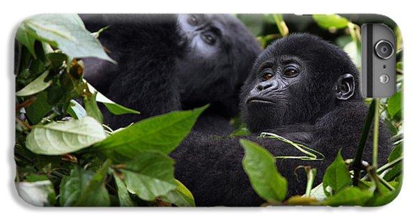 Africa iPhone 6 Plus Case - The Mountain Gorilla Gorilla Beringei by Karel Bartik