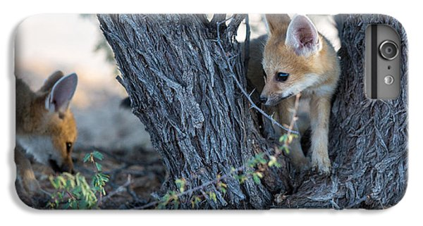 Africa iPhone 6 Plus Case - Two Cute Baby Cape Foxes Exploring by Otto Du Plessis