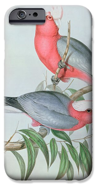 Cockatoo iPhone 6s Case -  Birds Of Asia by John Gould