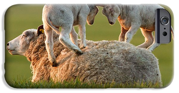 Sheep iPhone 6s Case -  Leap Sheeping Lambs by Roeselien Raimond