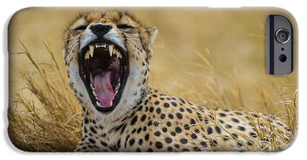 Africa Tanzania Cheetah (acinonyx IPhone 6s Case