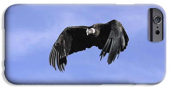 Andean Condor IPhone 6s Case by M. Watson