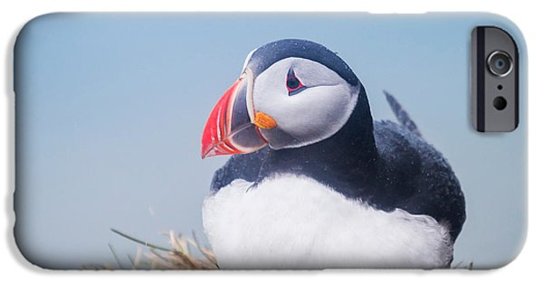 Atlantic Puffin Fratercula Arctica IPhone 6s Case by Panoramic Images
