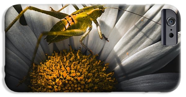 Australian Grasshopper On Flowers. Spring Concept IPhone 6s Case by Jorgo Photography - Wall Art Gallery