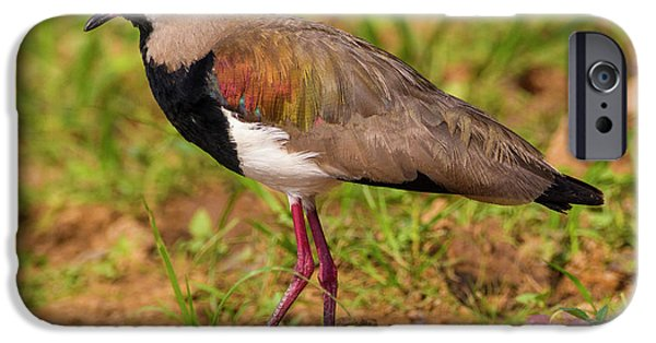 Lapwing iPhone 6s Case - Brazil A Southern Lapwing (vanellus by Ralph H. Bendjebar