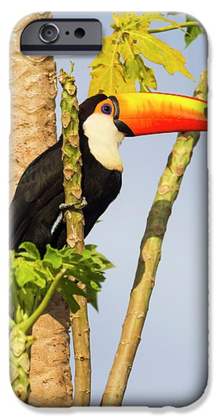 Brazil, Mato Grosso, The Pantanal, Toco IPhone 6s Case