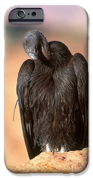 California Condor IPhone 6s Case by Art Wolfe