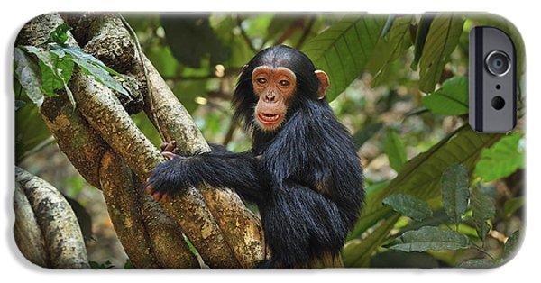 Chimpanzee Baby On Liana Gombe Stream IPhone 6s Case