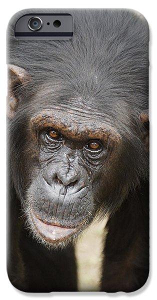 Chimpanzee Portrait Ol Pejeta IPhone 6s Case by Hiroya Minakuchi