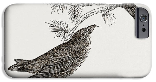 Crossbills IPhone 6s Case by Litz Collection