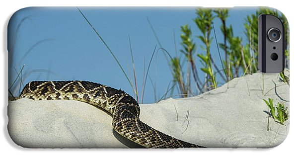 Diamondback iPhone 6s Case - Eastern Diamondback Rattlesnake by Pete Oxford