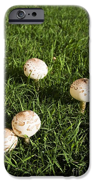 Field Of Mushrooms IPhone 6s Case by Jorgo Photography - Wall Art Gallery