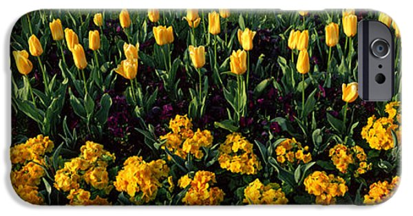 Flowers In Hyde Park, City IPhone 6s Case by Panoramic Images