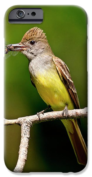 Great Crested Flycatcher Myiarchus IPhone 6s Case
