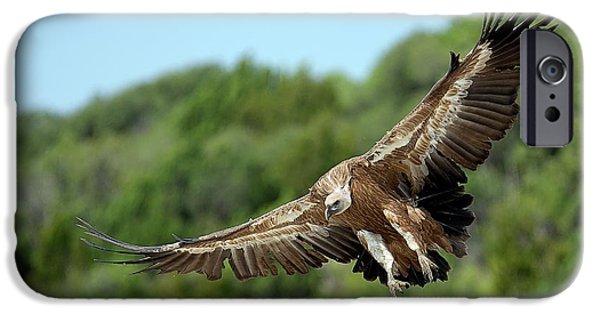 Griffon Vulture IPhone 6s Case