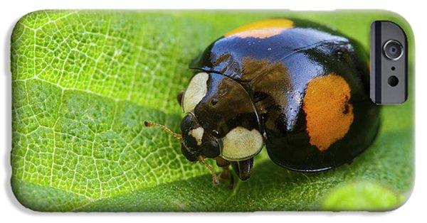 Harlequin Ladybird IPhone 6s Case by Heath Mcdonald
