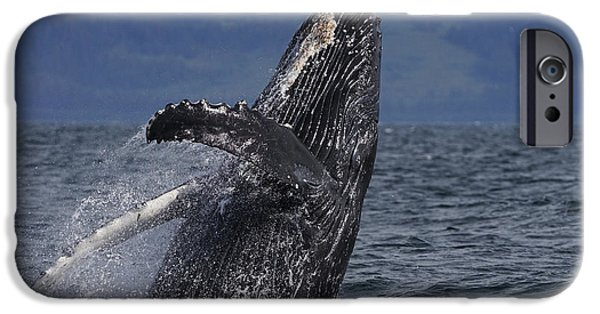 Humpback Whale Breaching Prince William IPhone 6s Case by Hiroya Minakuchi