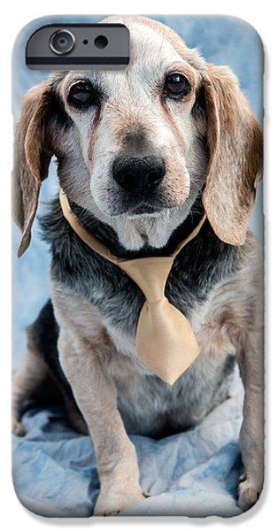 Dog iPhone 6s Case - Kippy Beagle Senior by Iris Richardson