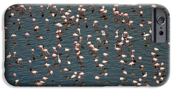 Lesser Flamingo, Lake Nakuru, Kenya IPhone 6s Case