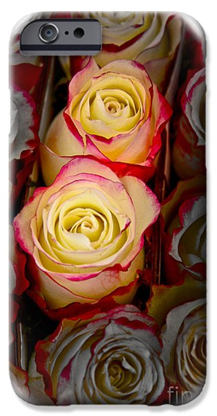 Love Is A Rose IPhone 6s Case by Al Bourassa